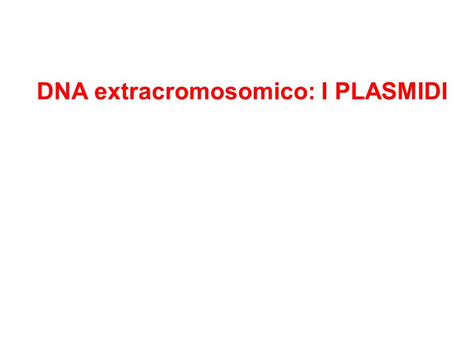 DNA extracromosomico: I PLASMIDI