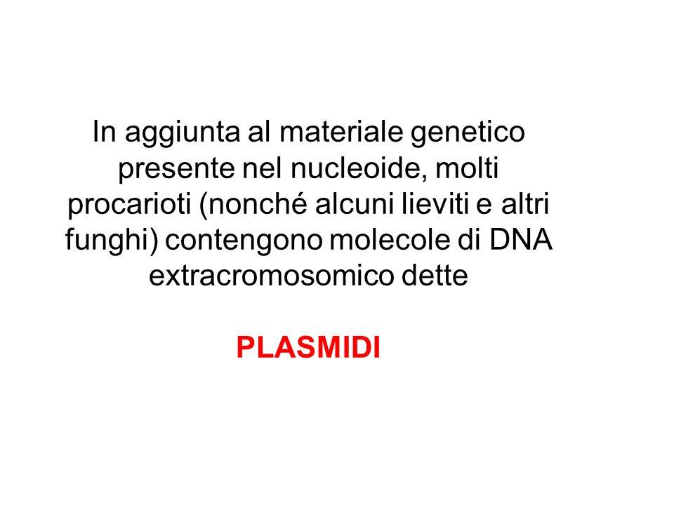 In aggiunta al materiale genetico presente nel nucleoide, molti procarioti (nonché alcuni lieviti e altri funghi) contengono molecole di DNA extracromosomico dette
