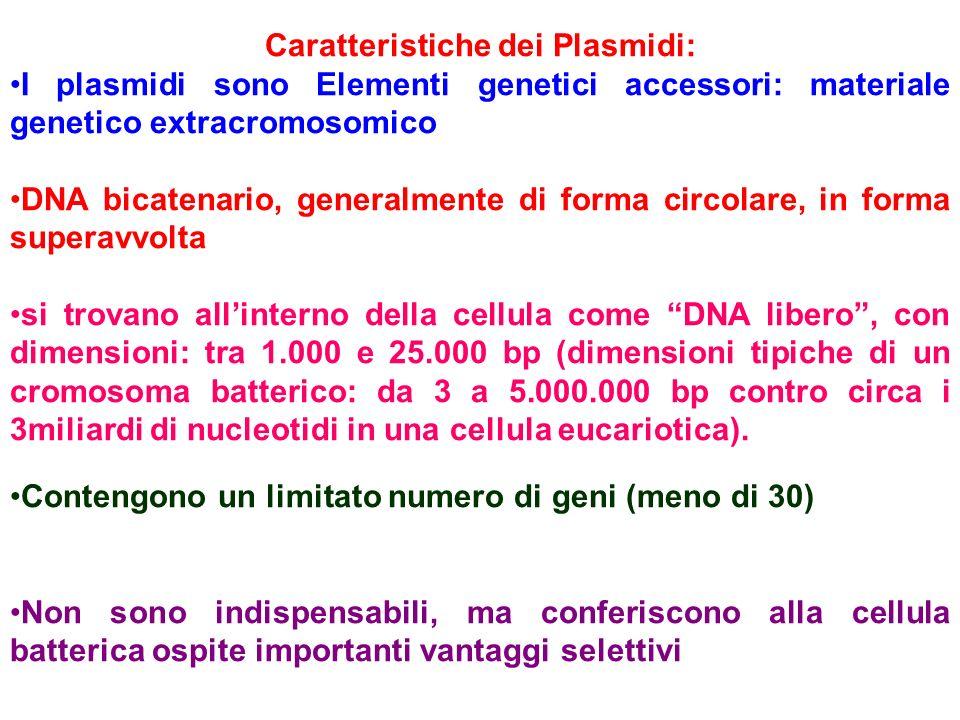 Caratteristiche dei Plasmidi: