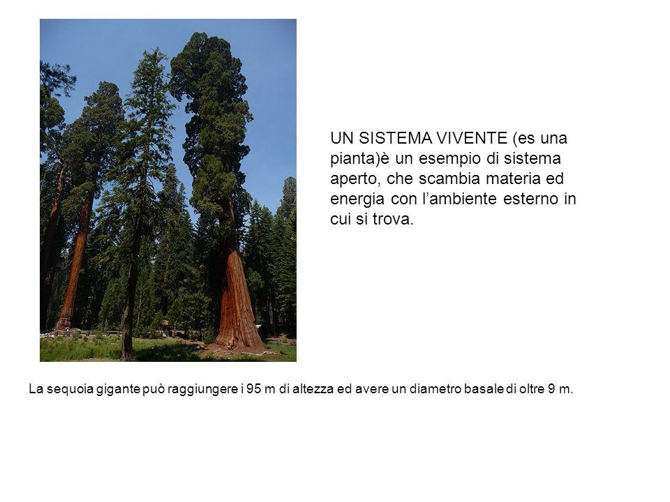 UN SISTEMA VIVENTE (es una pianta)è un esempio di sistema aperto, che scambia materia ed energia con l'ambiente esterno in cui si trova.