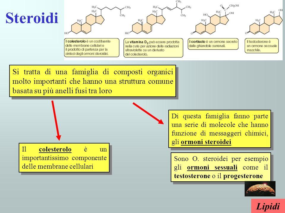 Steroidi Si tratta di una famiglia di composti organici molto importanti che hanno una struttura comune basata su più anelli fusi tra loro.