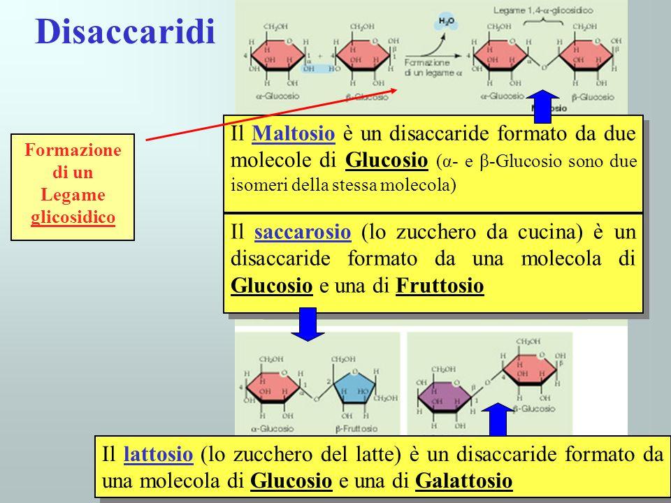 Disaccaridi Formazione di un. Legame glicosidico.