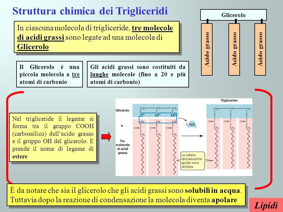 Struttura chimica dei Trigliceridi