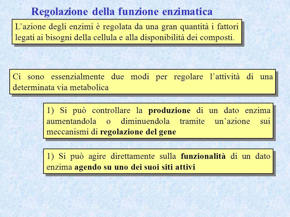 Regolazione della funzione enzimatica