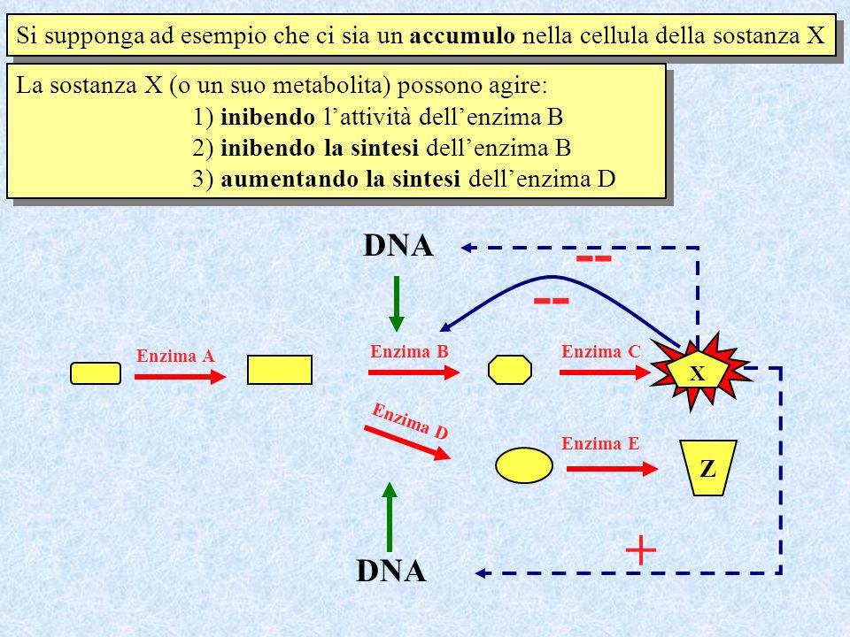 Si supponga ad esempio che ci sia un accumulo nella cellula della sostanza X