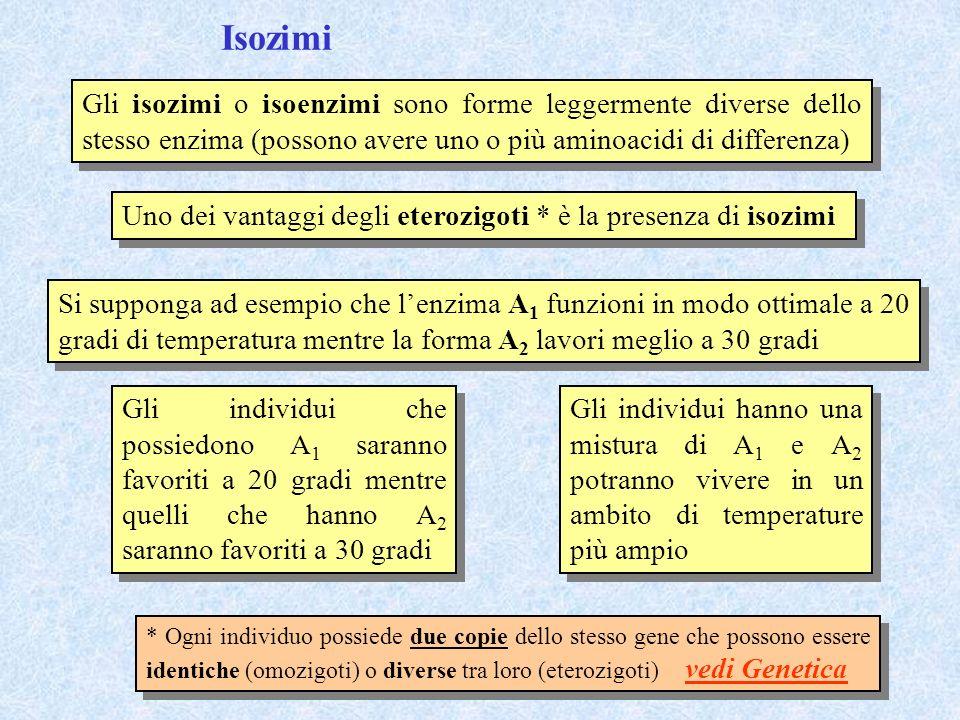 Isozimi Gli isozimi o isoenzimi sono forme leggermente diverse dello stesso enzima (possono avere uno o più aminoacidi di differenza)