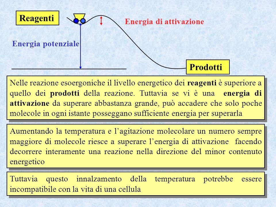 Reagenti Prodotti Energia di attivazione Energia potenziale