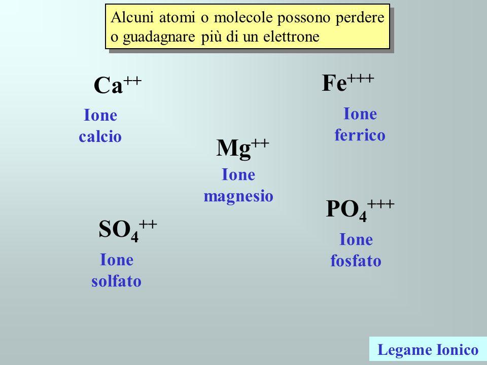 Fe+++ Ca++ Mg++ PO4+++ SO4++ Ione calcio Ione ferrico Ione magnesio