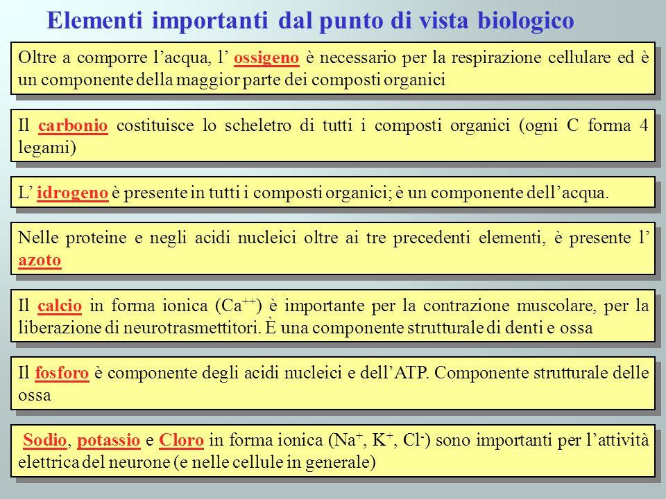 Elementi importanti dal punto di vista biologico