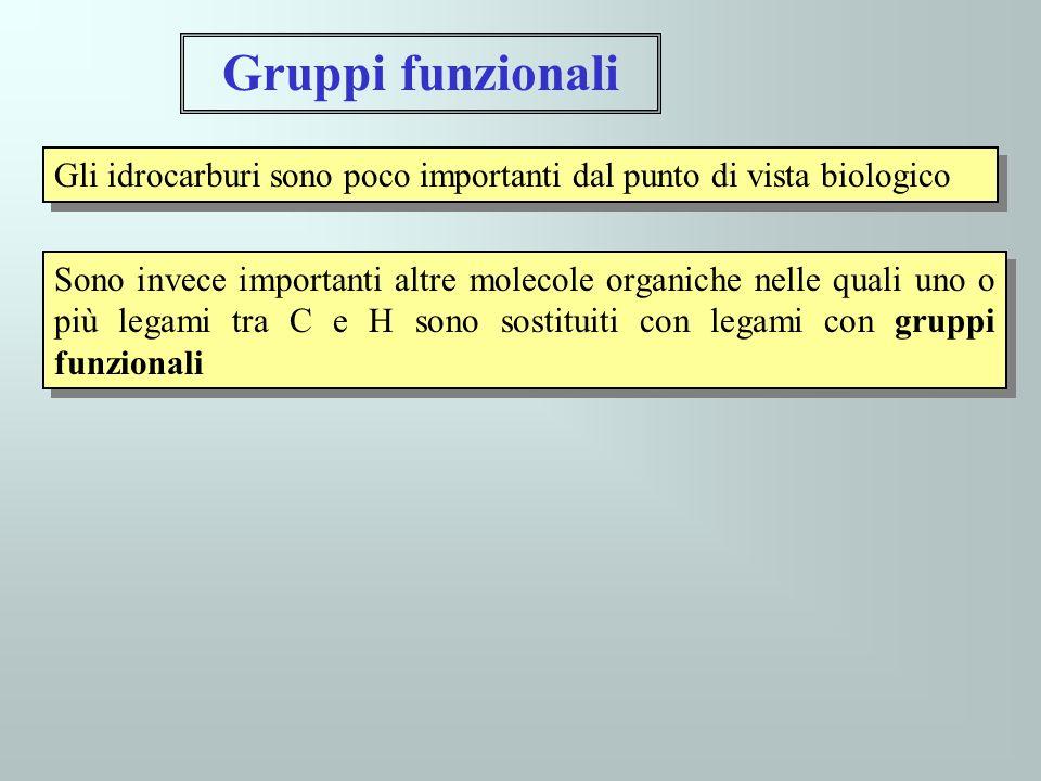 Gruppi funzionali Gli idrocarburi sono poco importanti dal punto di vista biologico.