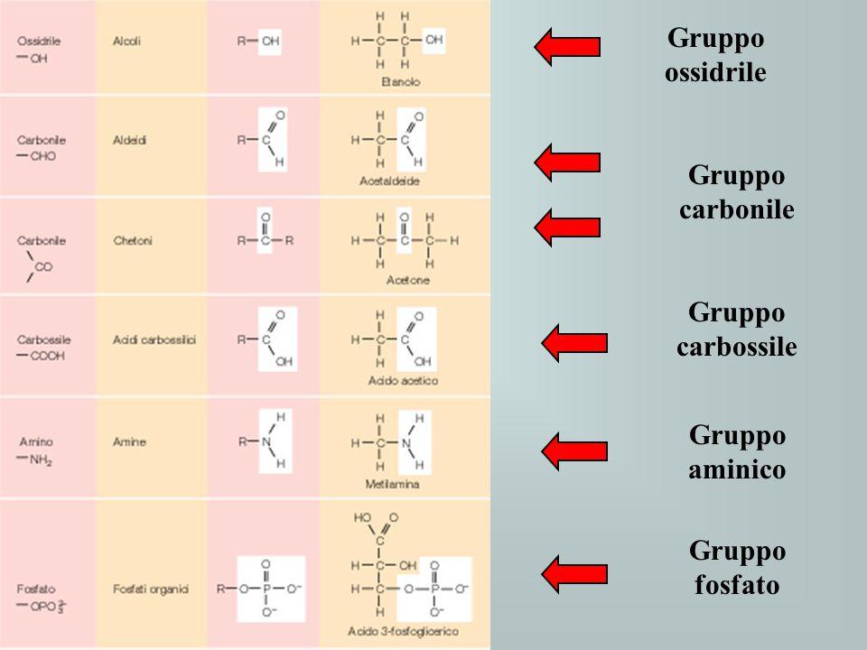 Gruppo ossidrile Gruppo carbonile Gruppo carbossile Gruppo aminico Gruppo fosfato