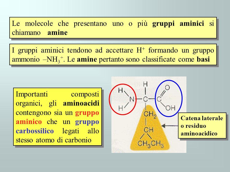 Le molecole che presentano uno o più gruppi aminici si chiamano amine