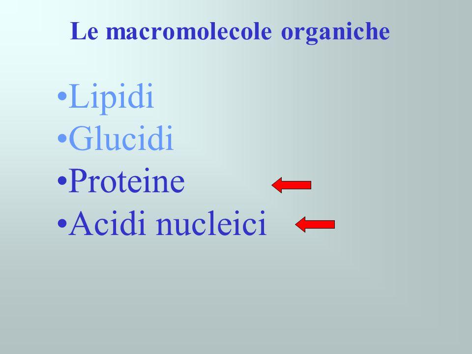 Le macromolecole organiche