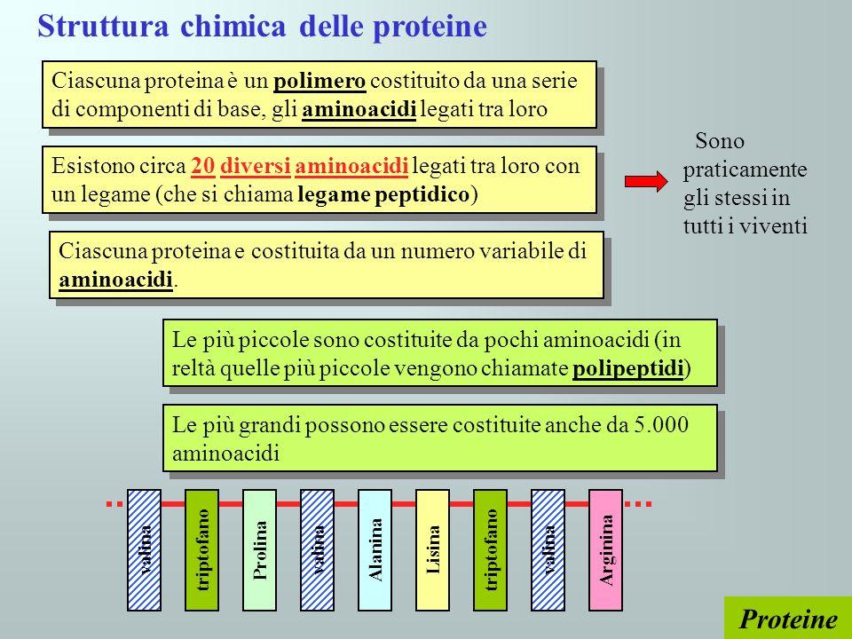 Struttura chimica delle proteine