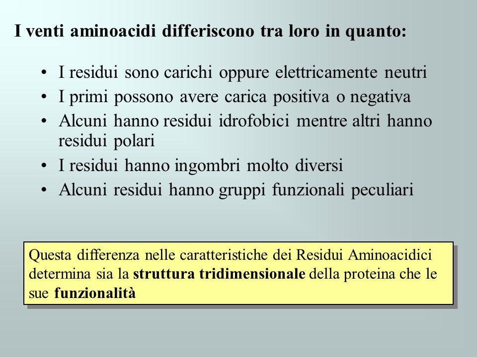 I venti aminoacidi differiscono tra loro in quanto: