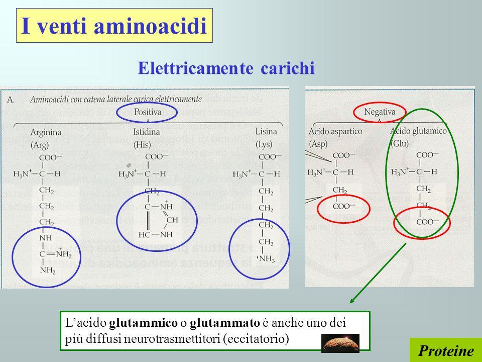 I venti aminoacidi Elettricamente carichi Proteine