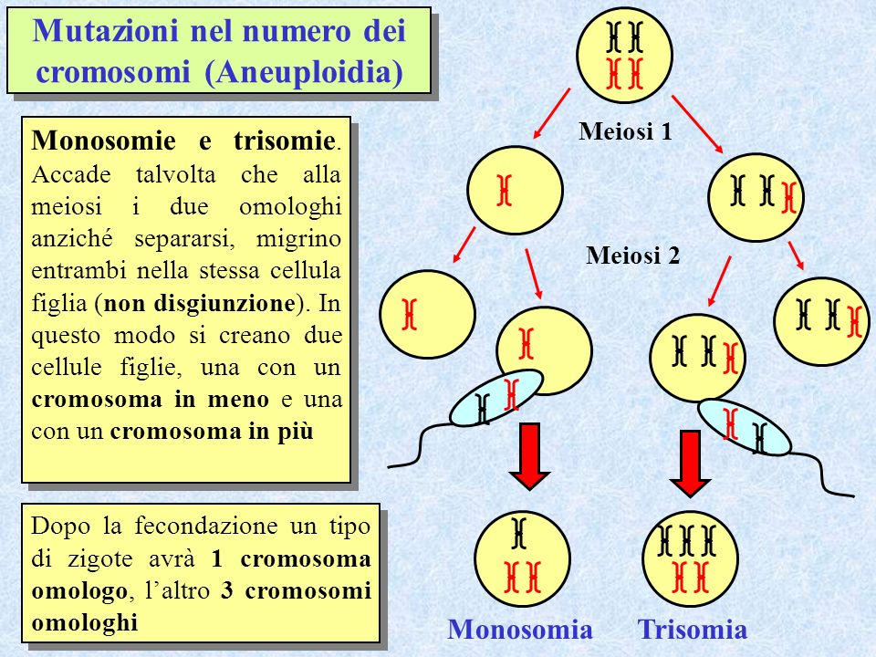 Mutazioni nel numero dei cromosomi (Aneuploidia)