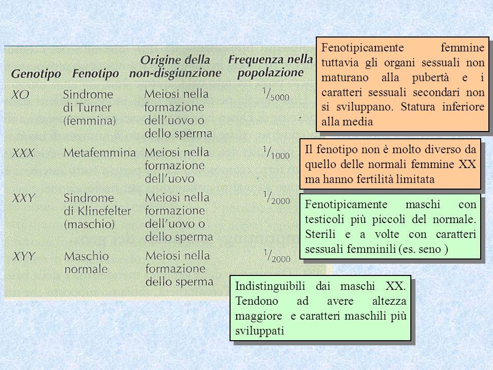 Fenotipicamente femmine tuttavia gli organi sessuali non maturano alla pubertà e i caratteri sessuali secondari non si sviluppano. Statura inferiore alla media
