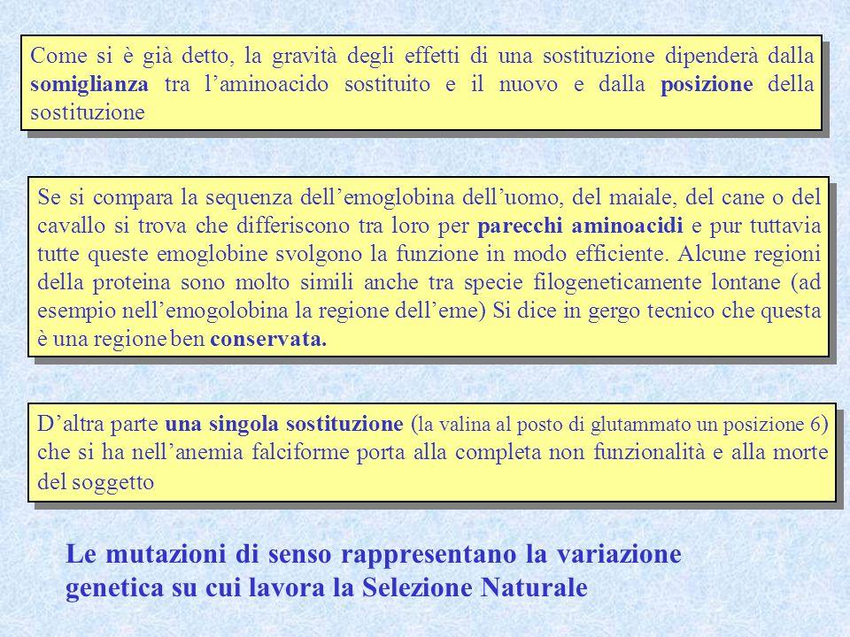 Come si è già detto, la gravità degli effetti di una sostituzione dipenderà dalla somiglianza tra l'aminoacido sostituito e il nuovo e dalla posizione della sostituzione