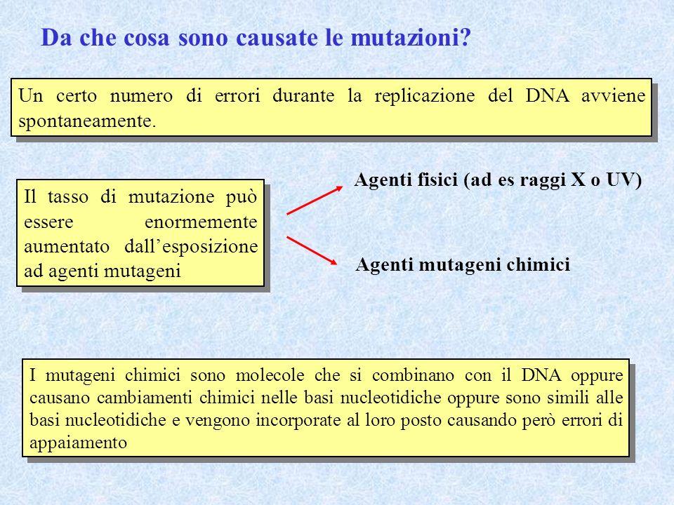 Da che cosa sono causate le mutazioni