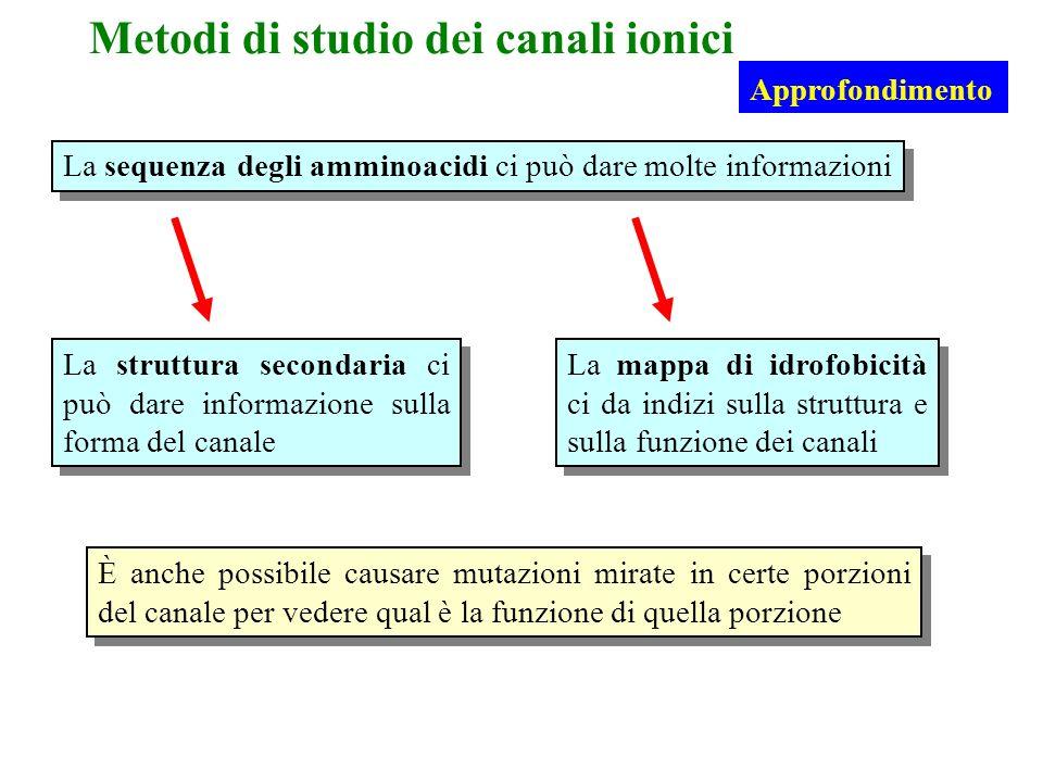 Metodi di studio dei canali ionici