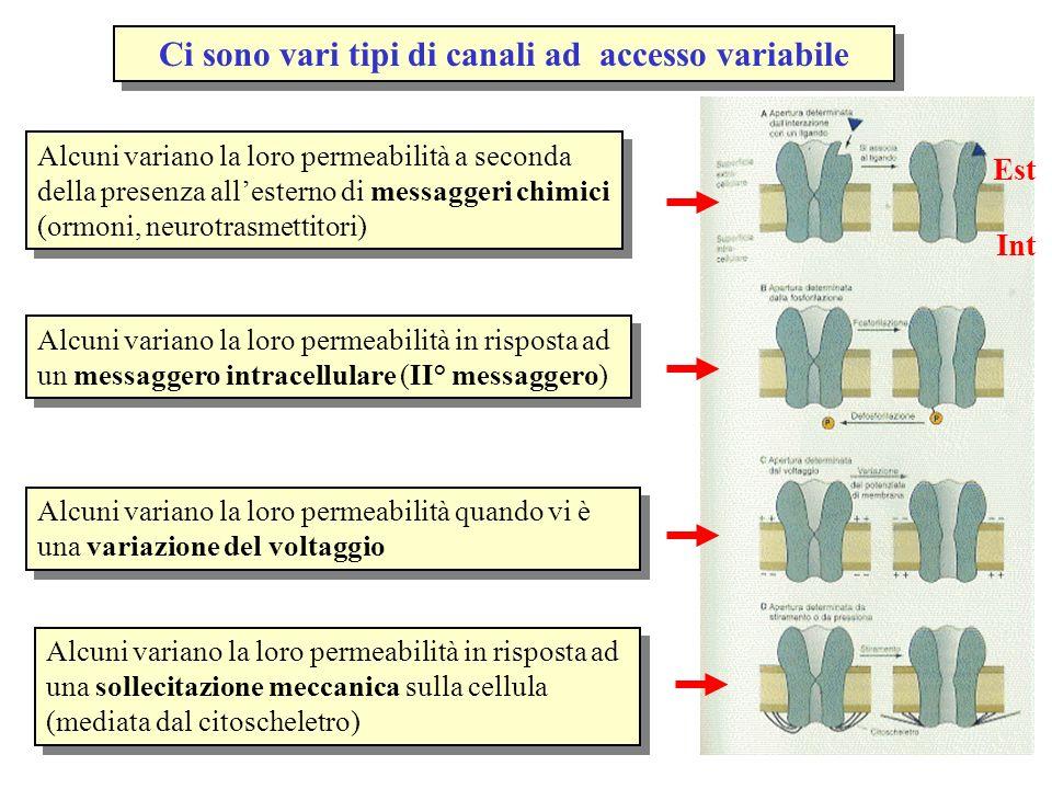 Ci sono vari tipi di canali ad accesso variabile