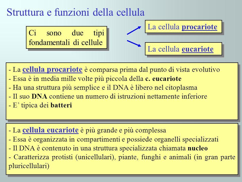 Struttura e funzioni della cellula
