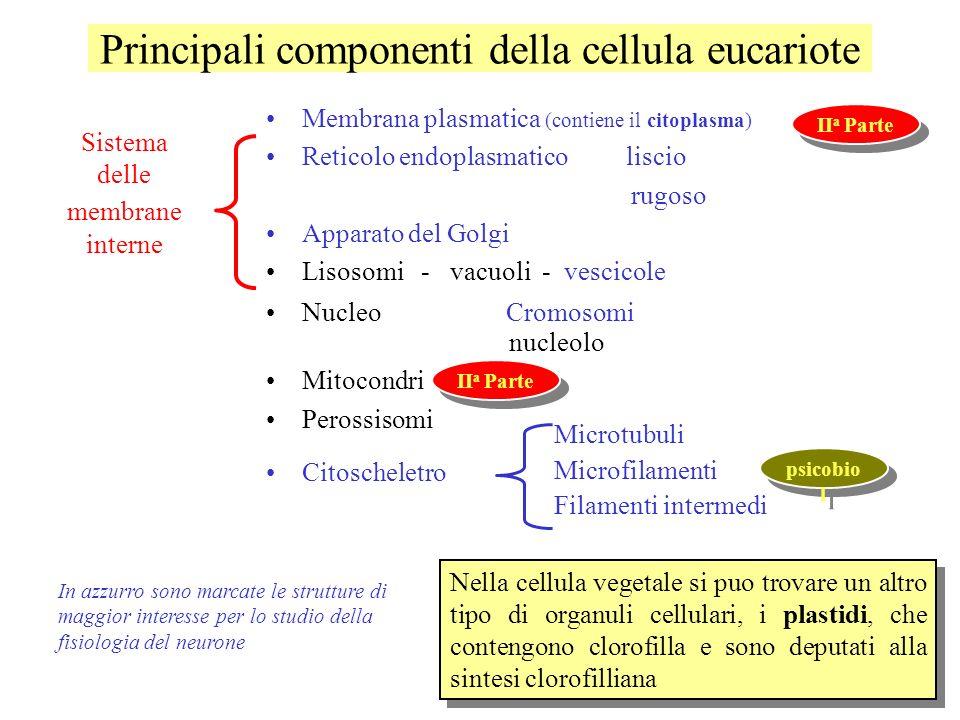 Principali componenti della cellula eucariote