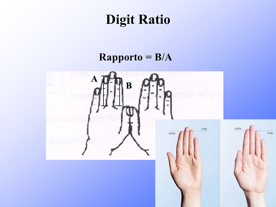 Digit Ratio Rapporto = B/A A B
