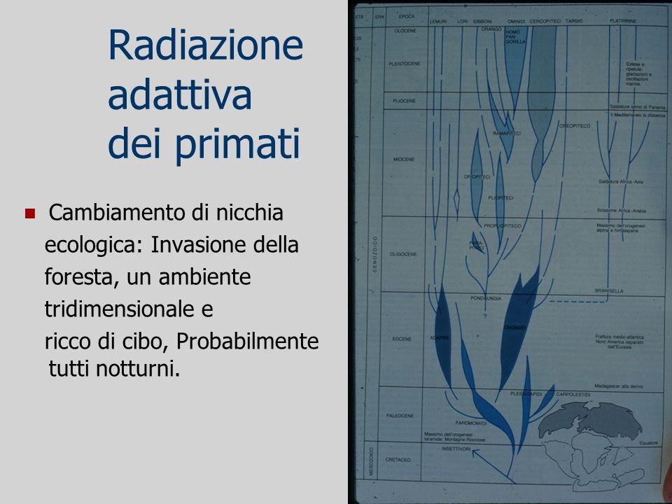 Radiazione adattiva dei primati