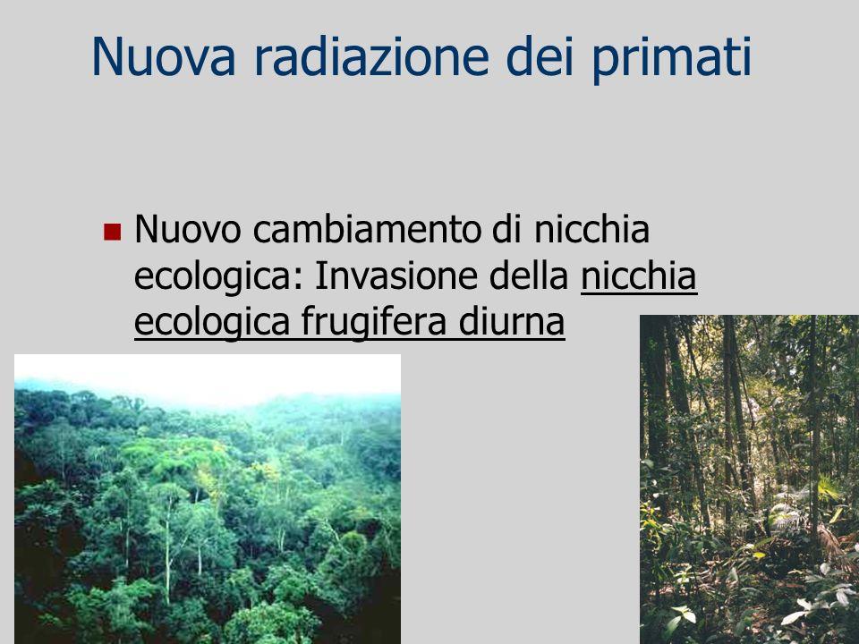 Nuova radiazione dei primati