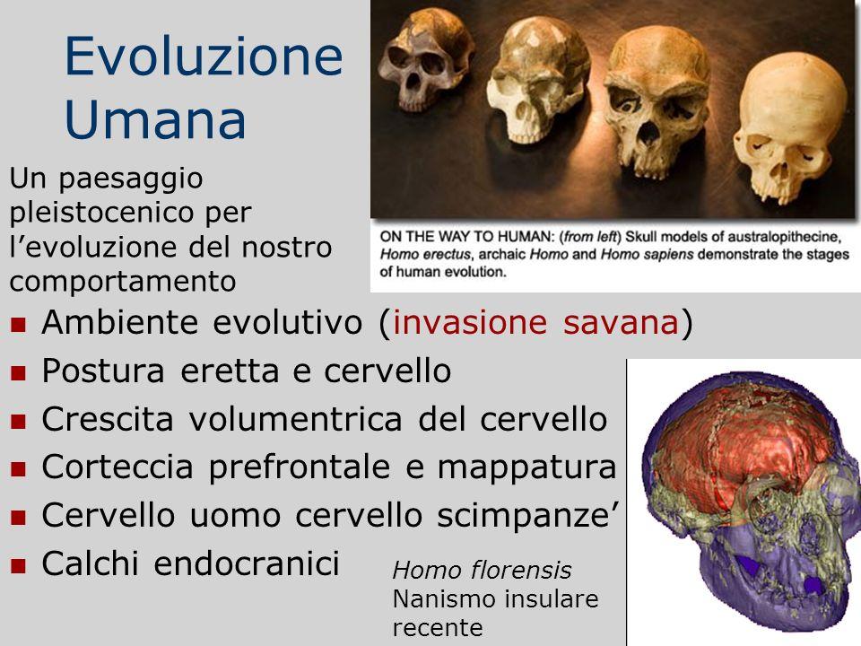 Evoluzione Umana Ambiente evolutivo (invasione savana)
