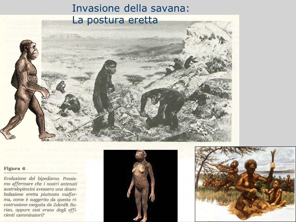 Invasione della savana: La postura eretta