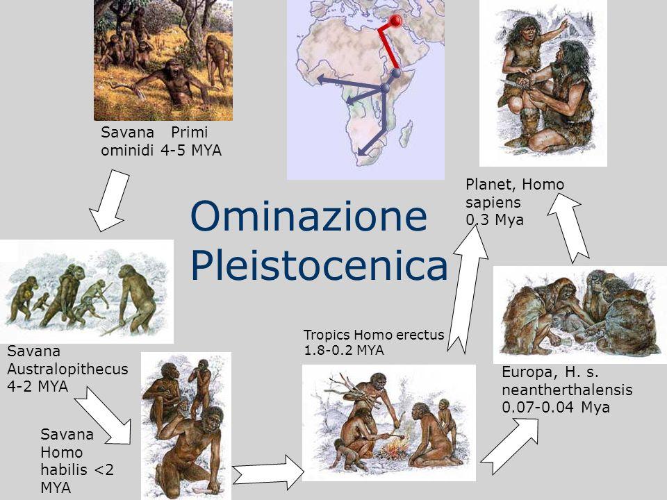 Ominazione Pleistocenica