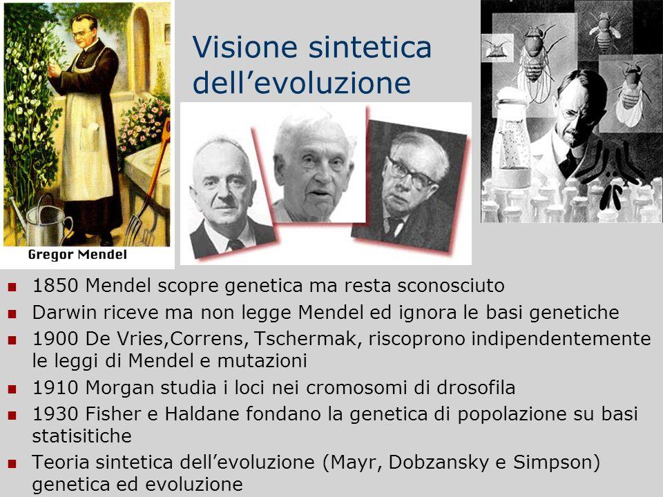 Visione sintetica dell'evoluzione