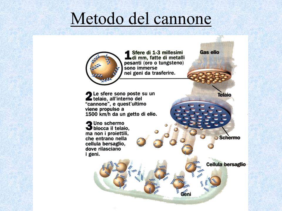 Metodo del cannone
