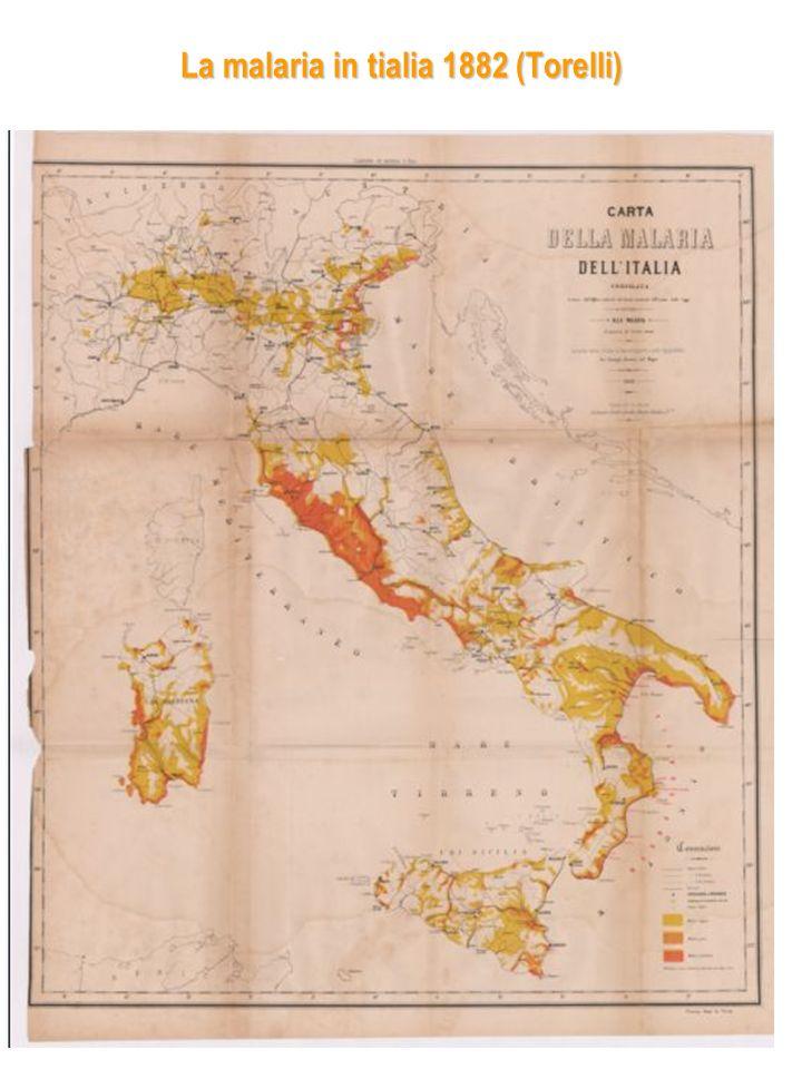 La malaria in tialia 1882 (Torelli)