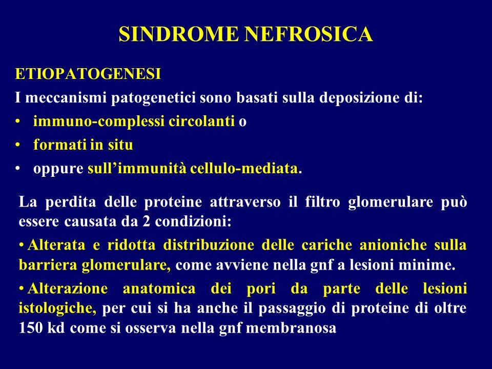 SINDROME NEFROSICA ETIOPATOGENESI