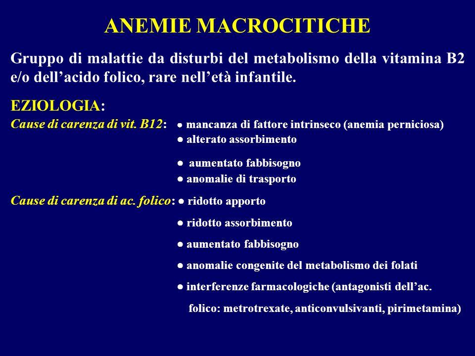 ANEMIE MACROCITICHE Gruppo di malattie da disturbi del metabolismo della vitamina B2 e/o dell'acido folico, rare nell'età infantile.