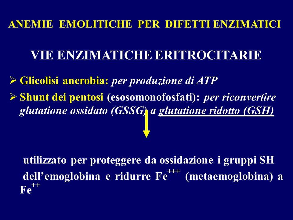 ANEMIE EMOLITICHE PER DIFETTI ENZIMATICI VIE ENZIMATICHE ERITROCITARIE