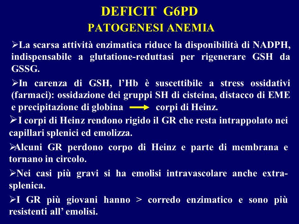 DEFICIT G6PD PATOGENESI ANEMIA