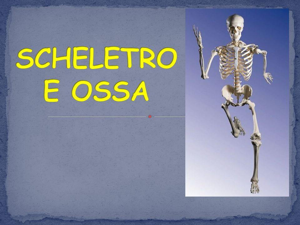 SCHELETRO E OSSA