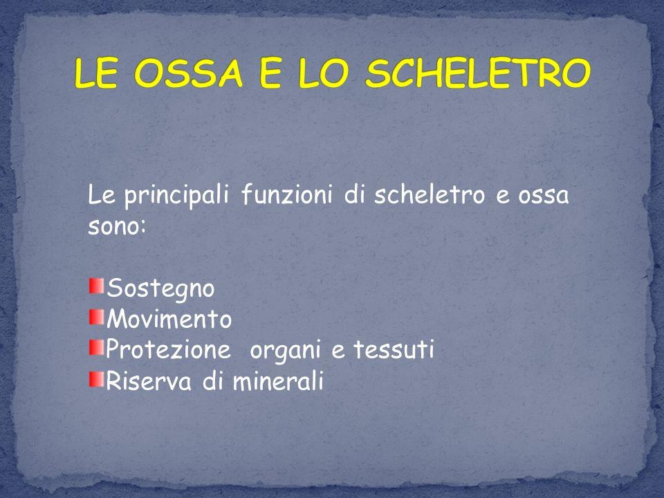 LE OSSA E LO SCHELETRO Le principali funzioni di scheletro e ossa sono: Sostegno. Movimento. Protezione organi e tessuti.