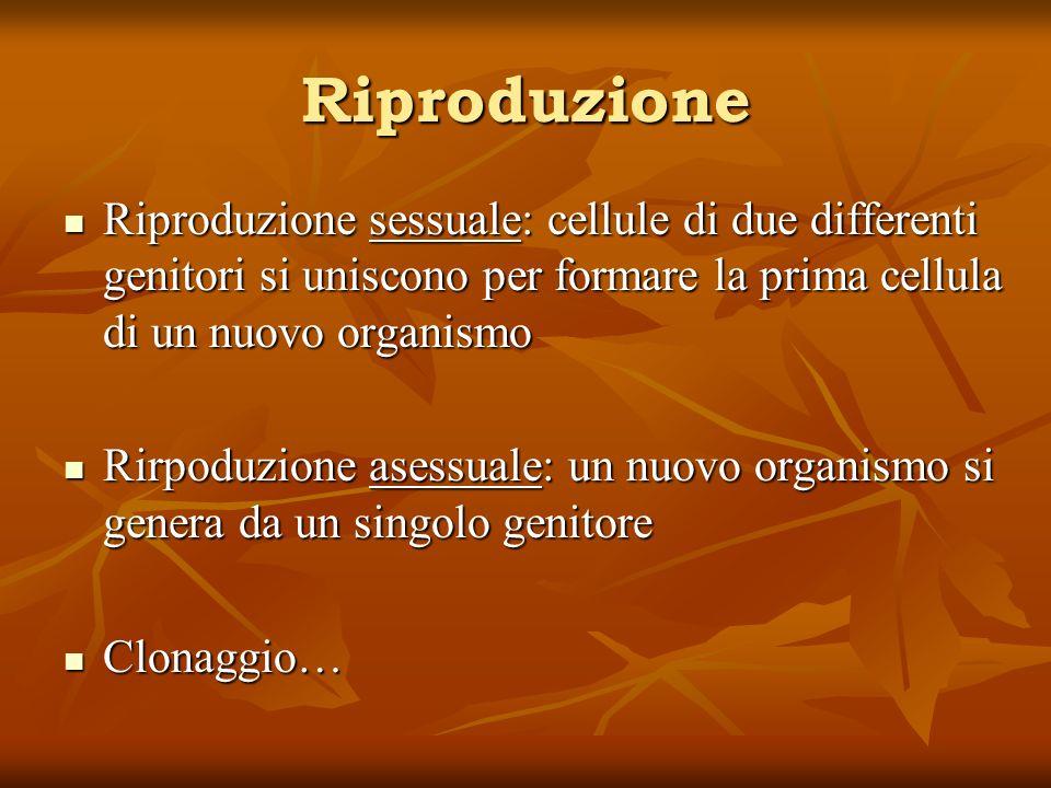 Riproduzione Riproduzione sessuale: cellule di due differenti genitori si uniscono per formare la prima cellula di un nuovo organismo.