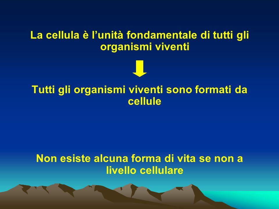 La cellula è l'unità fondamentale di tutti gli organismi viventi