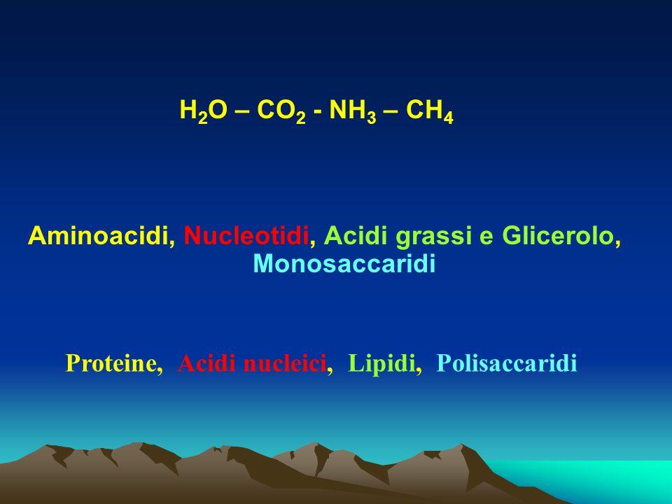 Aminoacidi, Nucleotidi, Acidi grassi e Glicerolo, Monosaccaridi