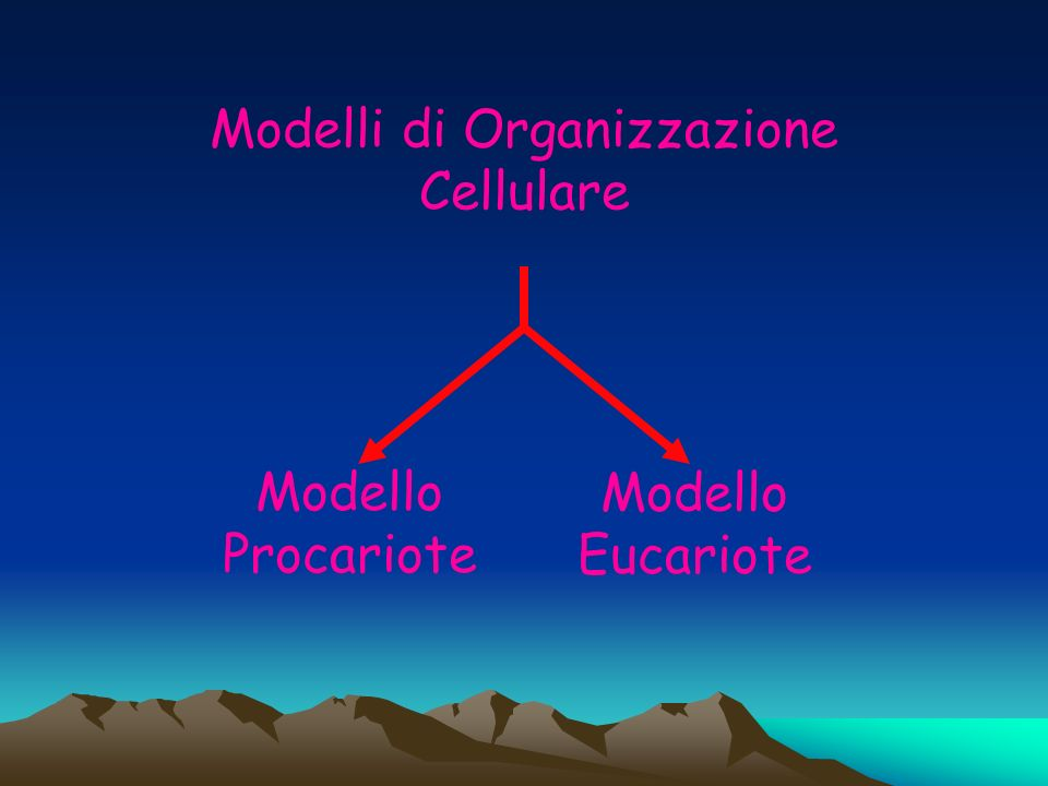 Modelli di Organizzazione Cellulare