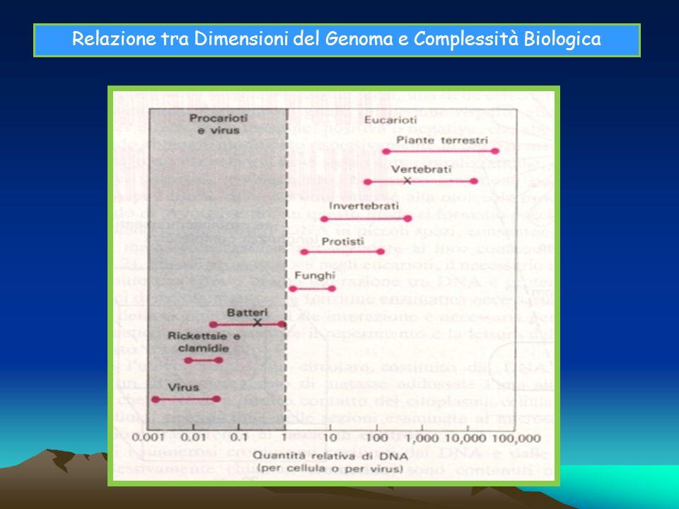 Relazione tra Dimensioni del Genoma e Complessità Biologica