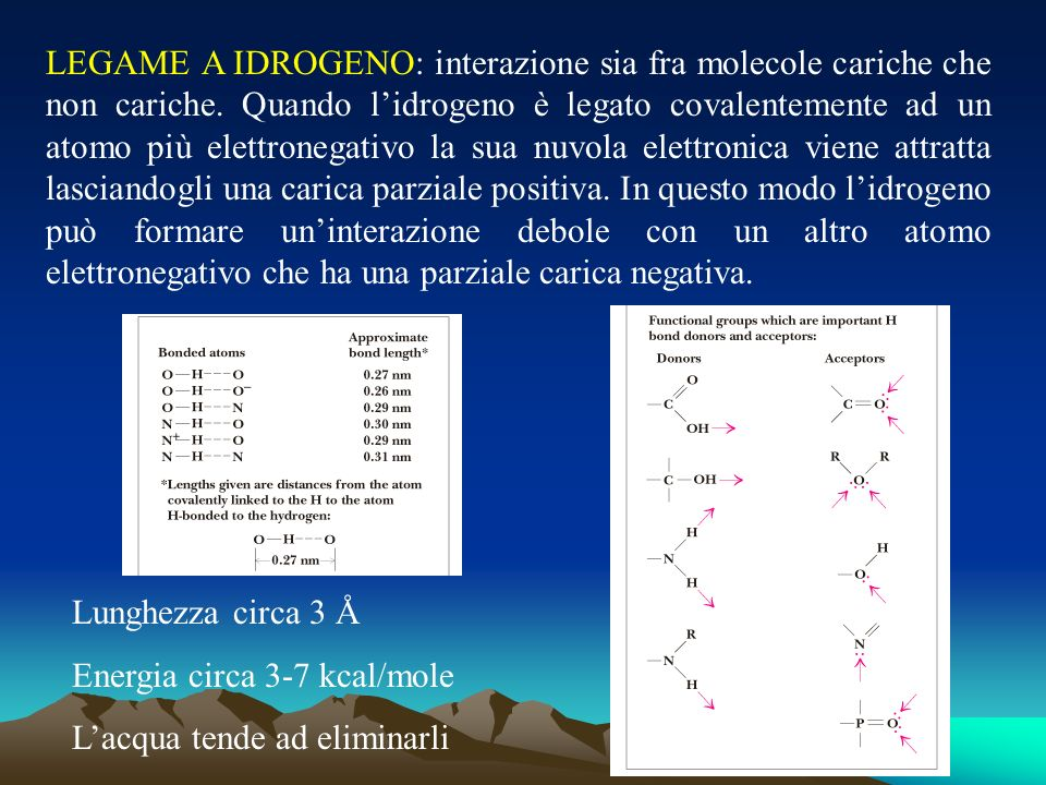 LEGAME A IDROGENO: interazione sia fra molecole cariche che non cariche. Quando l'idrogeno è legato covalentemente ad un atomo più elettronegativo la sua nuvola elettronica viene attratta lasciandogli una carica parziale positiva. In questo modo l'idrogeno può formare un'interazione debole con un altro atomo elettronegativo che ha una parziale carica negativa.