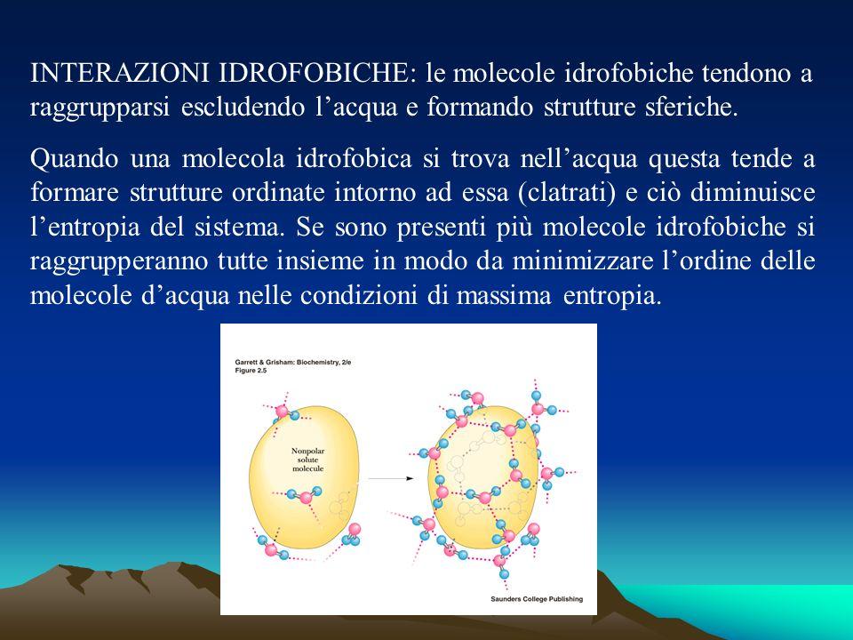 INTERAZIONI IDROFOBICHE: le molecole idrofobiche tendono a raggrupparsi escludendo l'acqua e formando strutture sferiche.